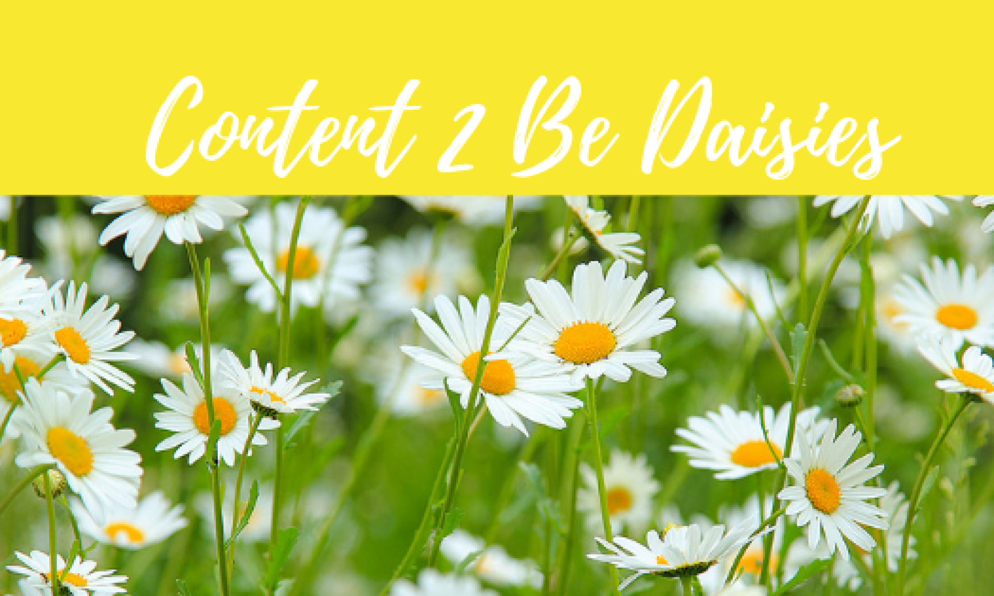 Content To Be Daisies